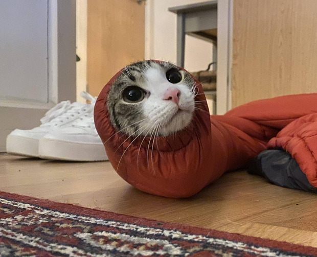 Loạt ảnh bóc mẽ chó mèo là thiên hạ đệ nhất vụng về nhưng lúc nào cũng diễn nét cool ngầu, thích chứng tỏ - Ảnh 17.