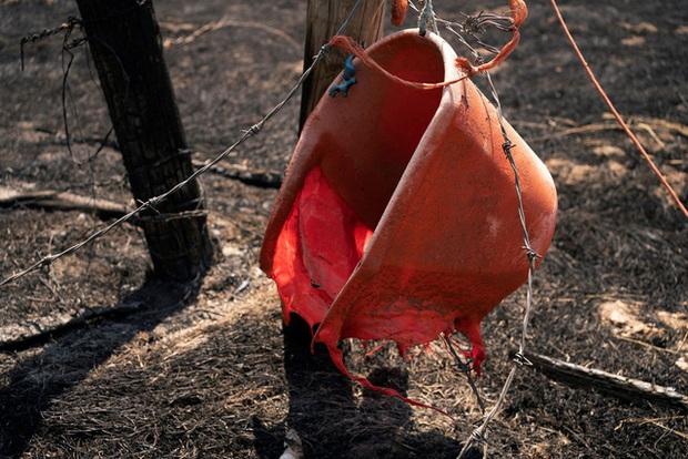 Cháy rừng bùng phát mạnh ở các bang miền Tây nước Mỹ, hàng nghìn ngôi nhà bị ảnh hưởng - Ảnh 6.