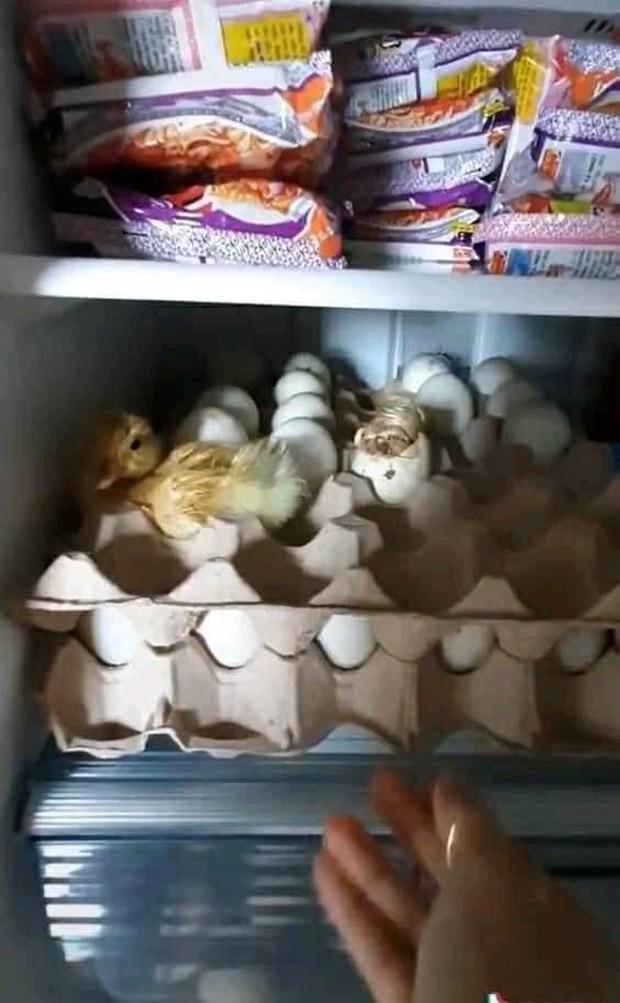 Mua trứng về nhà dự trữ trong mùa dịch, lúc mở tủ lạnh ra kiểm tra thì thanh niên mới tá hoả vì cảnh tượng kinh hoàng trước mặt - Ảnh 2.