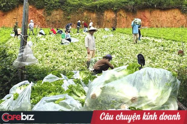 Nông dân tặng Sài Gòn cả vườn rau, sao doanh nghiệp lớn sá gì không chịu hi sinh vài đồng lợi nhuận: Một miếng bình ổn giá thời dịch hơn cả gói khuyến mãi ngày thường! - Ảnh 3.