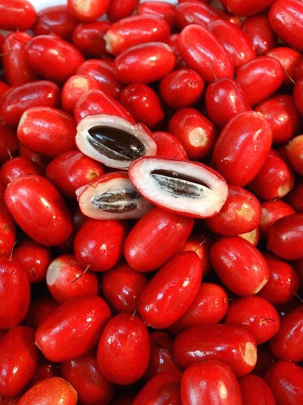 Kỳ diệu thứ quả có tên gọi thần kỳ, mang năng lực biến tất cả mọi vị đắng chua cay trên cuộc đời thành vị ngọt lịm tim - Ảnh 3.