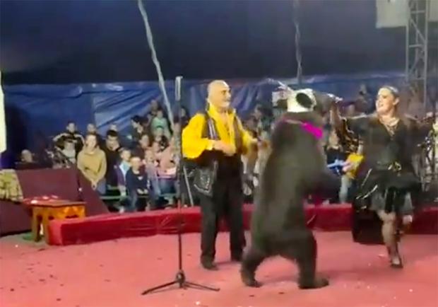 Video: Gấu đen bất ngờ hung bạo tấn công nữ HLV khi đang trình diễn khiến người xem đau tim, khó tin hơn là kết luận của rạp xiếc - Ảnh 3.