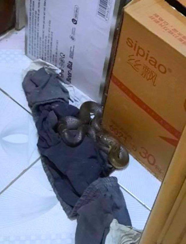Kinh hãi con rắn lớn trườn nhanh vào nhà dân ở Nghệ An, tấn công chú chó - Ảnh 1.