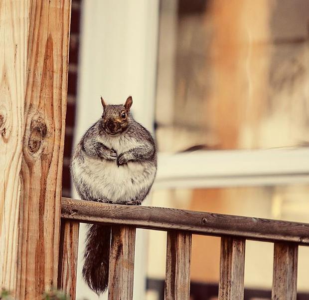 20 chú động vật béo núc ních, tròn vo tới nỗi ai nhìn cũng phải động lòng - Ảnh 4.