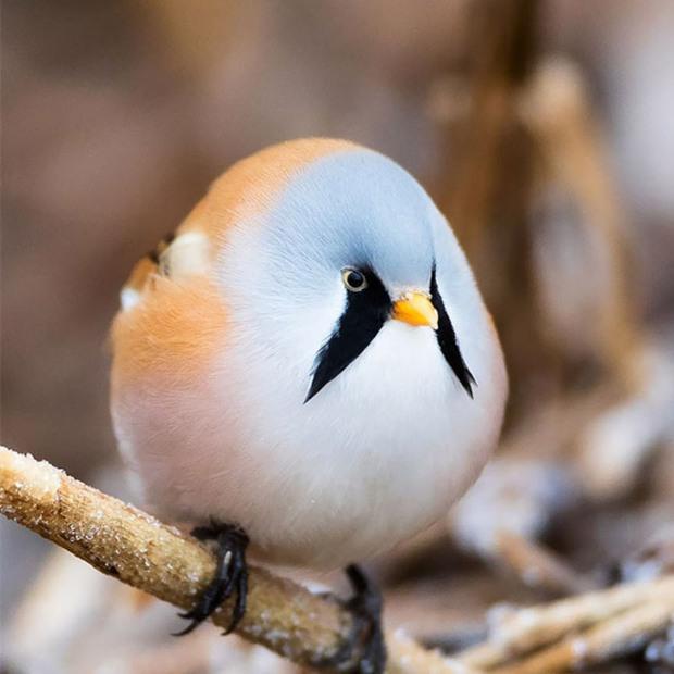 20 chú động vật béo núc ních, tròn vo tới nỗi ai nhìn cũng phải động lòng - Ảnh 8.