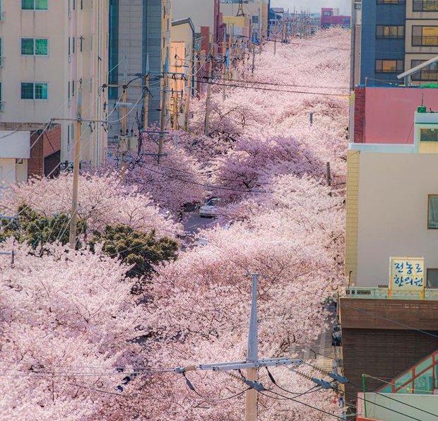 Nếu không đi du lịch Hàn Quốc, tôi sẽ chẳng bao giờ được thấy những thứ lạ đời này: Coi tới đâu là xỉu tới đó! - Ảnh 9.