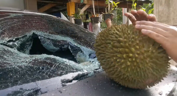 Trái sầu riêng này có gì đặc biệt mà giá lên tới 2,7 triệu đồng, đến cả Bộ trưởng Malaysia cũng muốn mua ăn thử? - Ảnh 4.