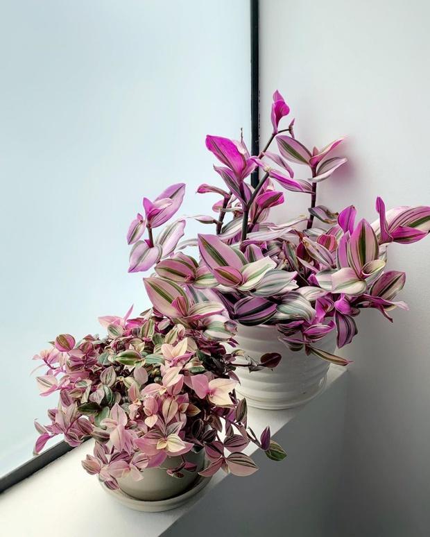 6 loại cây nên trưng trong phòng ngủ: Mang đến giấc ngủ ngon, thanh lọc không khí hóa giải stress - Ảnh 3.