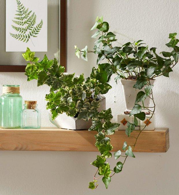 6 loại cây nên trưng trong phòng ngủ: Mang đến giấc ngủ ngon, thanh lọc không khí hóa giải stress - Ảnh 5.