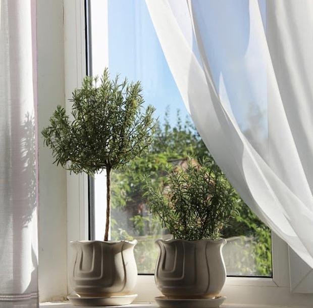 6 loại cây nên trưng trong phòng ngủ: Mang đến giấc ngủ ngon, thanh lọc không khí hóa giải stress - Ảnh 11.