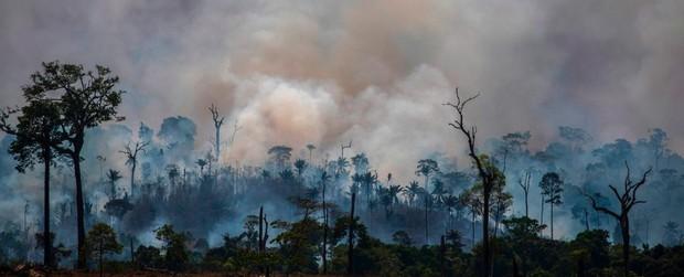 Tin rất buồn: Rừng Amazon chạm đến điểm cực hạn, đang phát thải CO2 còn nhiều hơn khả năng hấp thụ - Ảnh 1.