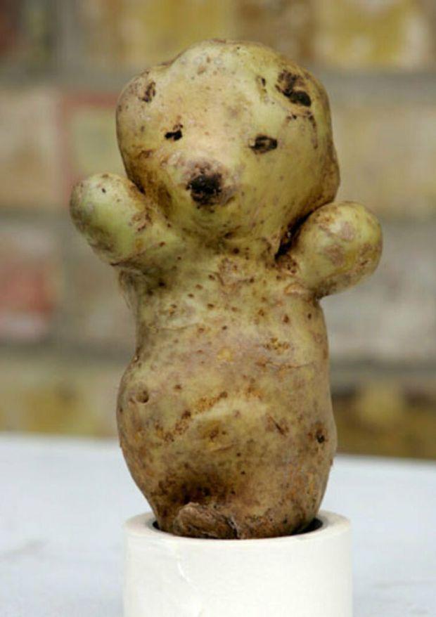 Té ngửa trước những màn biến hình kỳ dị của các loại rau củ quả, xem xong mới thấy đừng nên đùa với mẹ thiên nhiên!  - Ảnh 18.