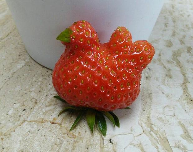 Té ngửa trước những màn biến hình kỳ dị của các loại rau củ quả, xem xong mới thấy đừng nên đùa với mẹ thiên nhiên!  - Ảnh 5.