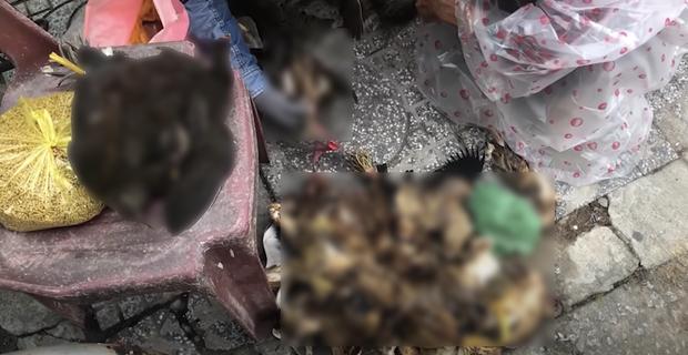 Lùm xùm khắc tên lên mai rùa chưa lắng, Thuỷ Tiên bị netizen khui lại clip treo ngược đàn cò lửa trên ô tô khi mua để phóng sinh - Ảnh 3.