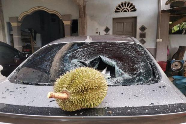 Thêm anh bán trái cây có nỗi buồn giống chị Phượng Chanel: Sầu riêng rụng làm kính xe ô tô vỡ nát, lỡ có người bên trong coi như toang! - Ảnh 2.