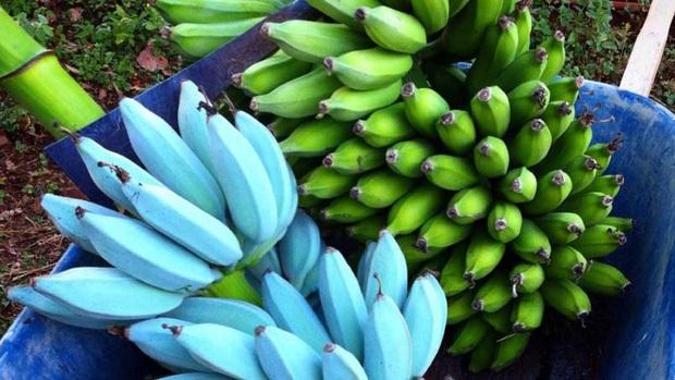 Giống chuối xanh biếc kì lạ tưởng chỉ là photoshop nào ngờ có thật 100%, lại còn được trồng ở rất gần Việt Nam - Ảnh 3.