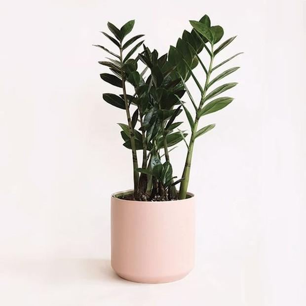 6 loại cây cảnh tốt lành nhiều nhà đang trồng nhưng lại không biết rằng càng lười chăm càng tốt - Ảnh 3.