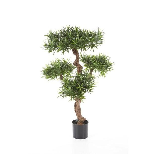 6 loại cây cảnh tốt lành nhiều nhà đang trồng nhưng lại không biết rằng càng lười chăm càng tốt - Ảnh 9.