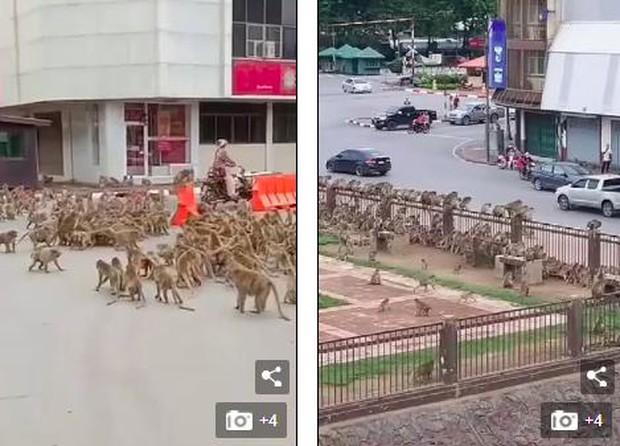 Thái Lan: Tài xế sốc trước hàng trăm con khỉ ẩu đả giữa đường  - Ảnh 3.