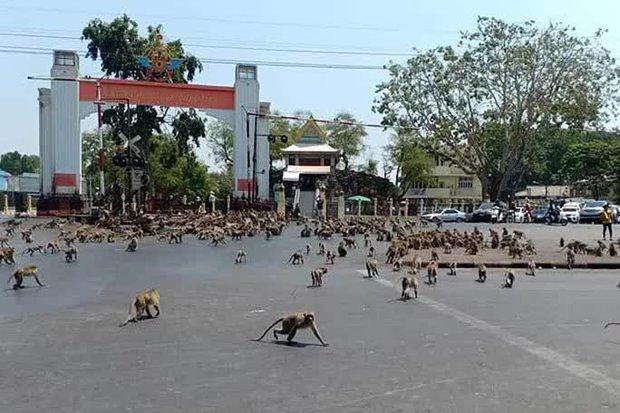 Thái Lan: Tài xế sốc trước hàng trăm con khỉ ẩu đả giữa đường  - Ảnh 4.