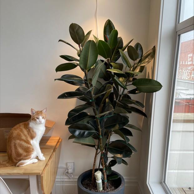 7 loại cây xinh xắn dễ chăm nên trồng trong bếp: Cây thanh lọc không khí, cây làm gia vị cực đỉnh - Ảnh 9.