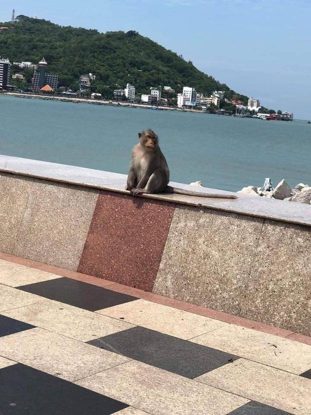 Clip: Bầy khỉ đói ở Vũng Tàu leo dây điện nhảy vào ban công nhà dân, khổ chủ chỉ biết câm nín để đạo tặc ăn sạch rau quý - Ảnh 5.