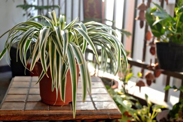 7 loại cây xinh xắn dễ chăm nên trồng trong bếp: Cây thanh lọc không khí, cây làm gia vị cực đỉnh - Ảnh 7.