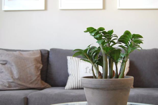 7 loại cây xinh xắn dễ chăm nên trồng trong bếp: Cây thanh lọc không khí, cây làm gia vị cực đỉnh - Ảnh 13.