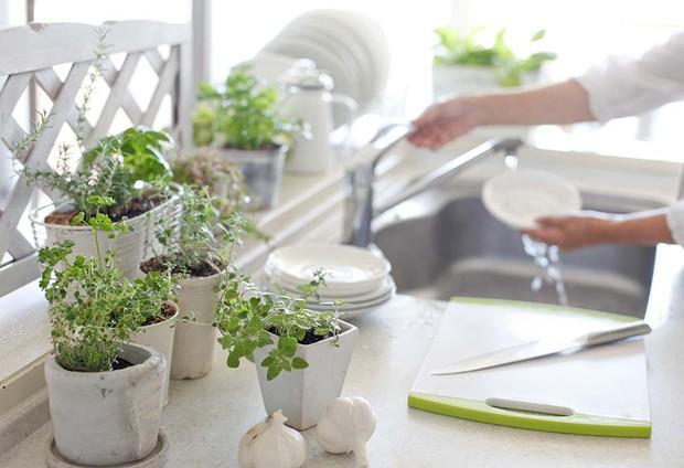 7 loại cây xinh xắn dễ chăm nên trồng trong bếp: Cây thanh lọc không khí, cây làm gia vị cực đỉnh - Ảnh 3.