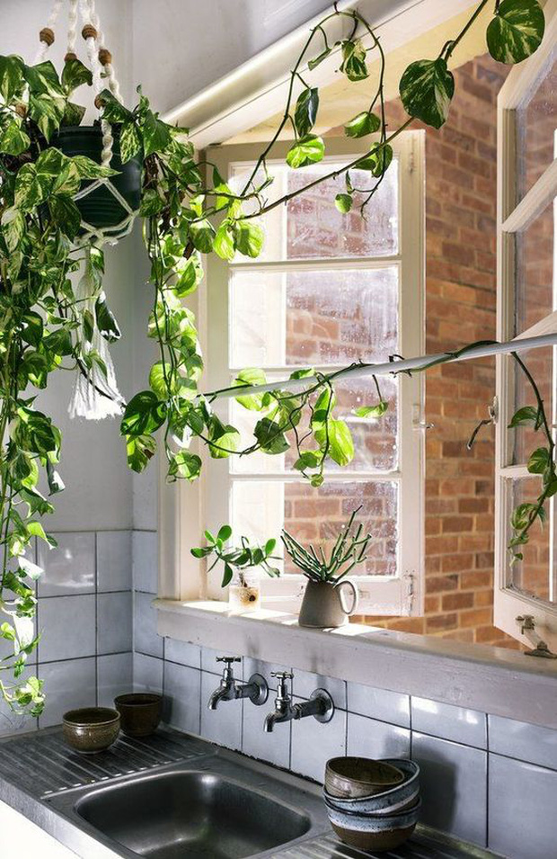 7 loại cây xinh xắn dễ chăm nên trồng trong bếp: Cây thanh lọc không khí, cây làm gia vị cực đỉnh - Ảnh 1.