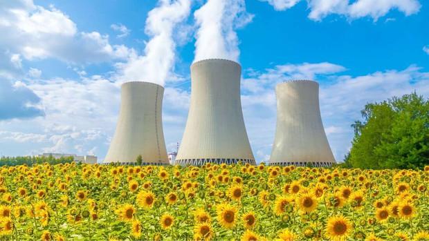 Đồng hoa hướng dương khổng lồ mọc lên ngay cạnh nhà máy Fukushima sau thảm họa hạt nhân chết chóc nhất lịch sử: Chuyện bí ẩn gì đây? - Ảnh 4.