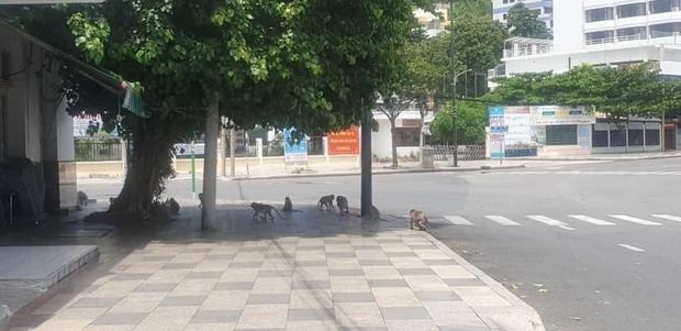 Hình ảnh gây sốc: Hai đàn khỉ đói lao vào đấm nhau ngay trên đường phố, độ hung hãn tuyên bố các bé khỉ ở Vũng Tàu không có tuổi - Ảnh 6.