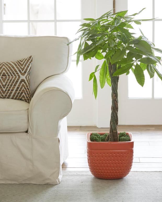 6 loại cây phong thủy nhà nào cũng nên trồng để tăng may mắn an lành, nhiều an khang thịnh vượng - Ảnh 3.