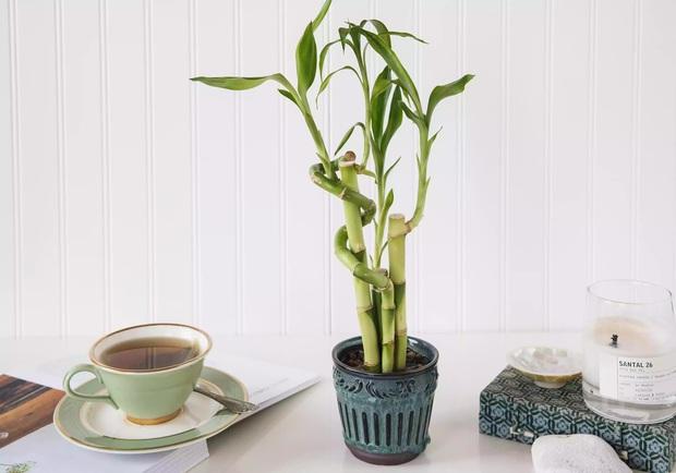 6 loại cây phong thủy nhà nào cũng nên trồng để tăng may mắn an lành, nhiều an khang thịnh vượng - Ảnh 7.