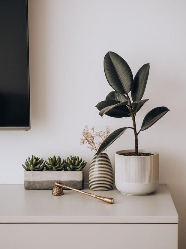 6 loại cây phong thủy nhà nào cũng nên trồng để tăng may mắn an lành, nhiều an khang thịnh vượng - Ảnh 11.