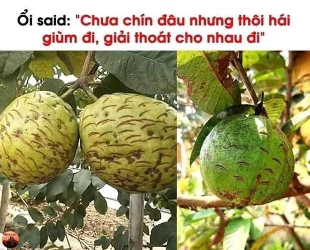 Một thói quen xấu của nhiều người khi mua hoa quả gây nhức nhối, ở Việt Nam hay nước ngoài đều bắt gặp - Ảnh 3.