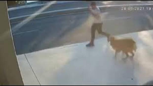 Clip: Bị chó bên đường dọa giật mình, chàng trai gặp tai nạn thảm khốc trong phút chốc do sơ suất đáng tiếc - Ảnh 2.