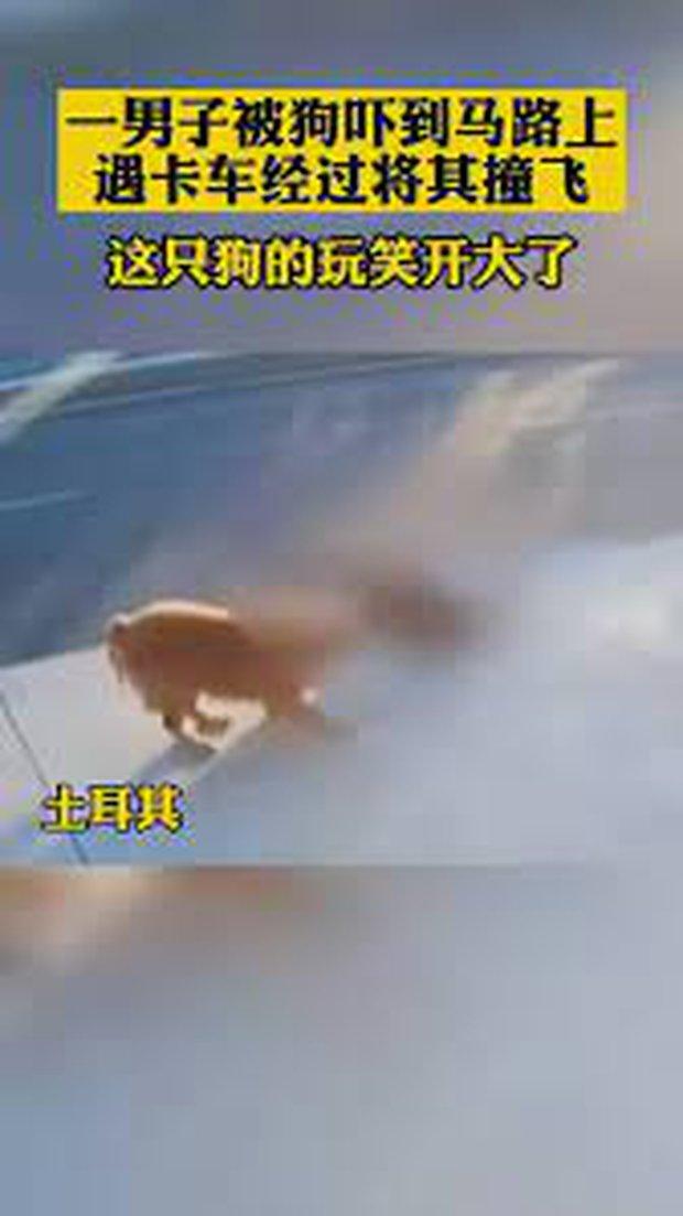 Clip: Bị chó bên đường dọa giật mình, chàng trai gặp tai nạn thảm khốc trong phút chốc do sơ suất đáng tiếc - Ảnh 3.