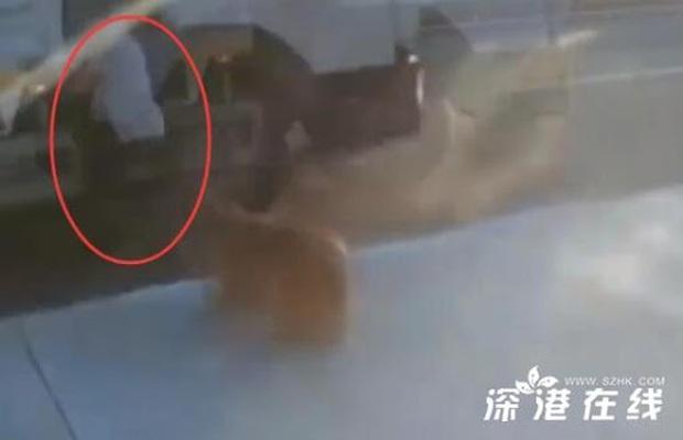 Clip: Bị chó bên đường dọa giật mình, chàng trai gặp tai nạn thảm khốc trong phút chốc do sơ suất đáng tiếc - Ảnh 4.