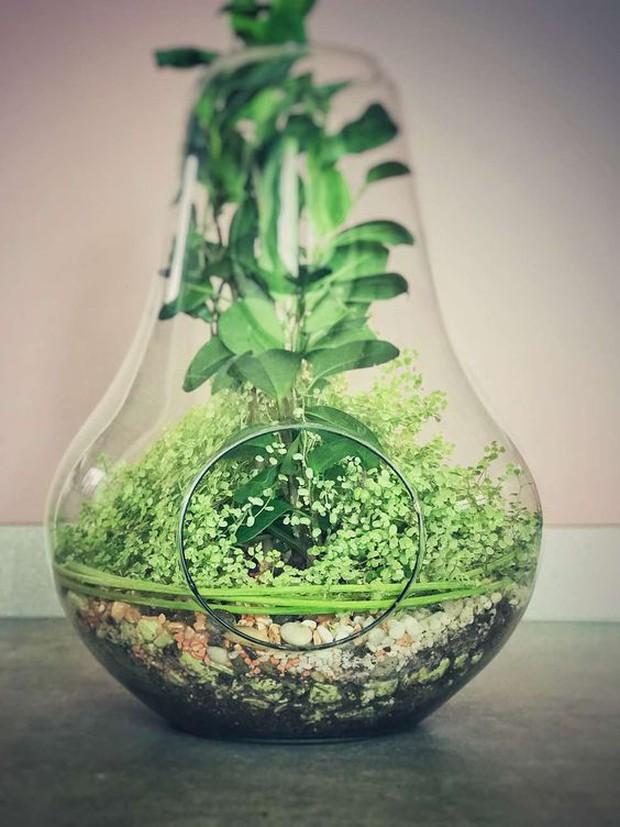 7 loại cây trồng trong đất hay nước đều được, vừa đẹp mắt vừa mang đến năng lượng tích cực cho gia chủ - Ảnh 1.