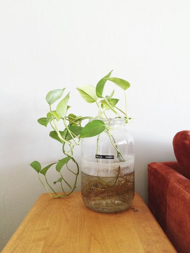 7 loại cây trồng trong đất hay nước đều được, vừa đẹp mắt vừa mang đến năng lượng tích cực cho gia chủ - Ảnh 9.