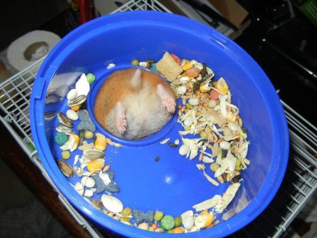 Tuyển tập những chú động vật rơi vào trùng điệp rắc rối chỉ vì tham ăn, muốn giả vờ là ổn cũng khó - Ảnh 1.