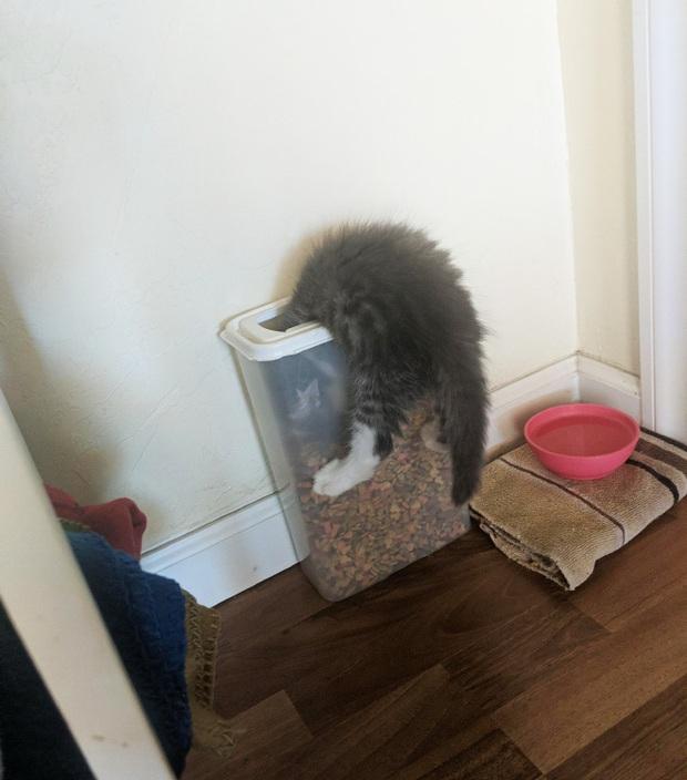 Tuyển tập những chú động vật rơi vào trùng điệp rắc rối chỉ vì tham ăn, muốn giả vờ là ổn cũng khó - Ảnh 12.