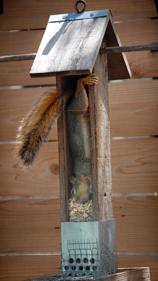 Tuyển tập những chú động vật rơi vào trùng điệp rắc rối chỉ vì tham ăn, muốn giả vờ là ổn cũng khó - Ảnh 14.