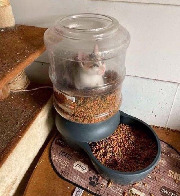Tuyển tập những chú động vật rơi vào trùng điệp rắc rối chỉ vì tham ăn, muốn giả vờ là ổn cũng khó - Ảnh 2.