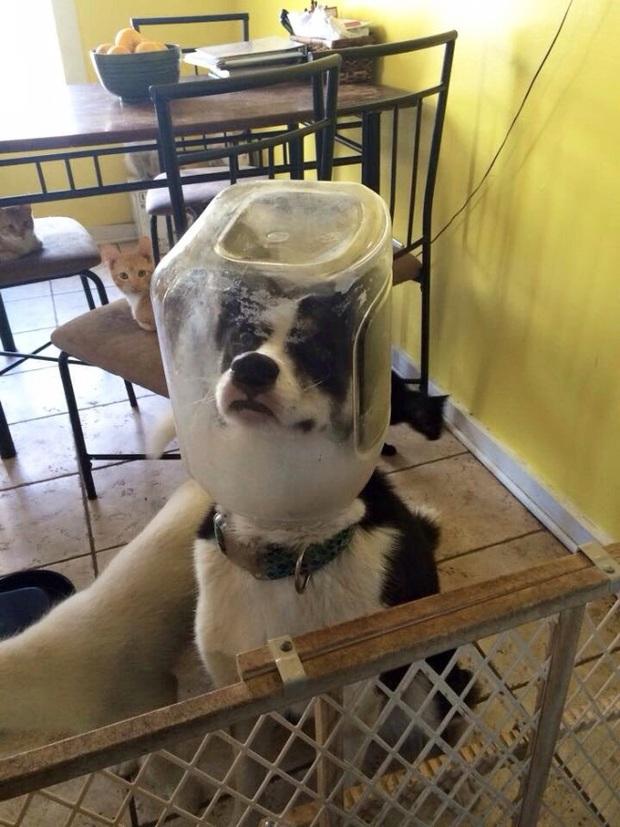 Tuyển tập những chú động vật rơi vào trùng điệp rắc rối chỉ vì tham ăn, muốn giả vờ là ổn cũng khó - Ảnh 8.