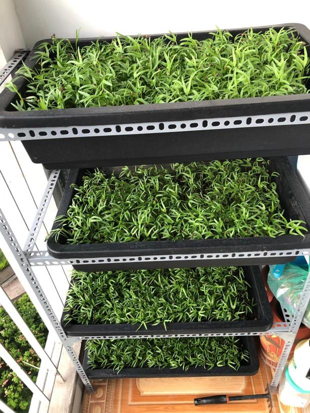 Dân mạng mở hội khoe vườn mini xanh mướt cải thiện bữa ăn: Khỏi đòi về quê trồng rau, nuôi cá nữa nhé! - Ảnh 13.