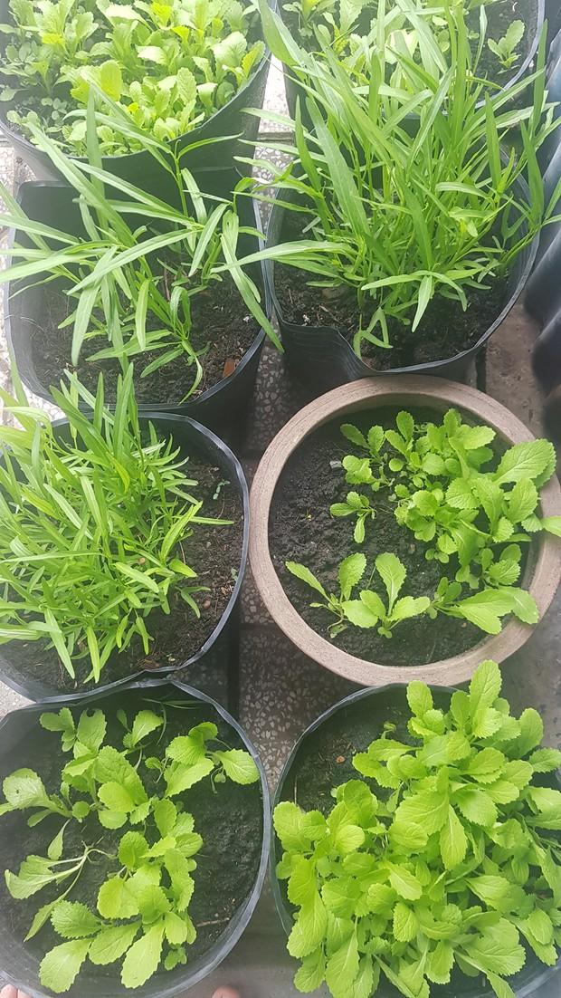 Dân mạng mở hội khoe vườn mini xanh mướt cải thiện bữa ăn: Khỏi đòi về quê trồng rau, nuôi cá nữa nhé! - Ảnh 11.
