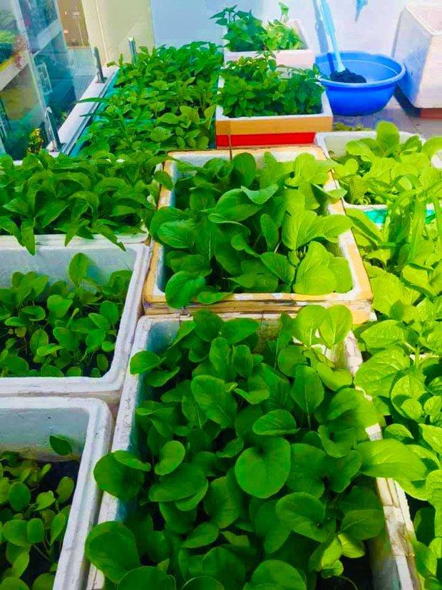 Dân mạng mở hội khoe vườn mini xanh mướt cải thiện bữa ăn: Khỏi đòi về quê trồng rau, nuôi cá nữa nhé! - Ảnh 17.
