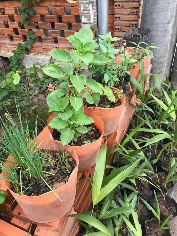 Dân mạng mở hội khoe vườn mini xanh mướt cải thiện bữa ăn: Khỏi đòi về quê trồng rau, nuôi cá nữa nhé! - Ảnh 7.